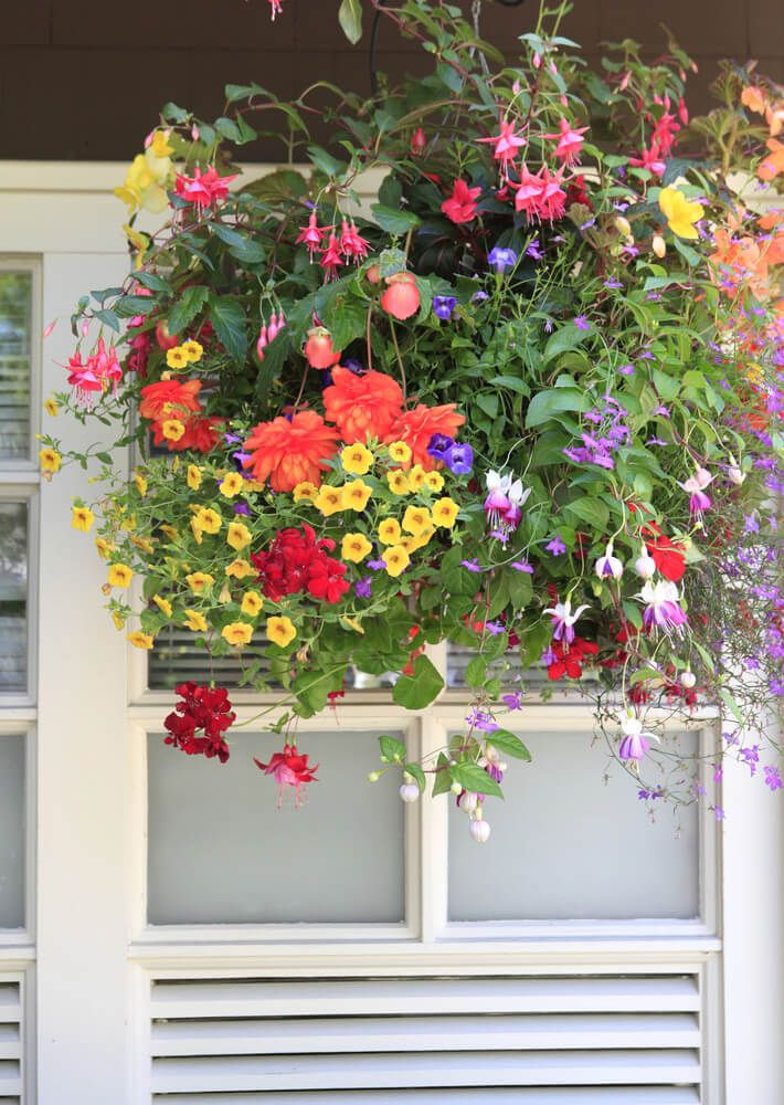 Range Flower Baskets : Best hanging baskets images on