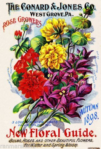 1898 Rose Growers Vintage Flowers Seed Packet Catalogue Advertisement Poster | eBay