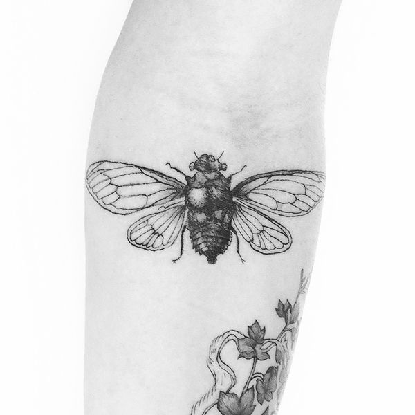 Insect Tattoos by Vincent Hachen, via Behance