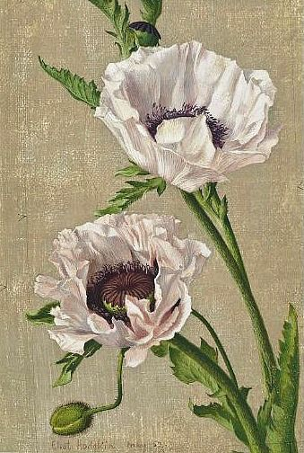 ❀ Blooming Brushwork ❀ garden and still life flower paintings - Eliot Hodgkin Pink Poppies 1952