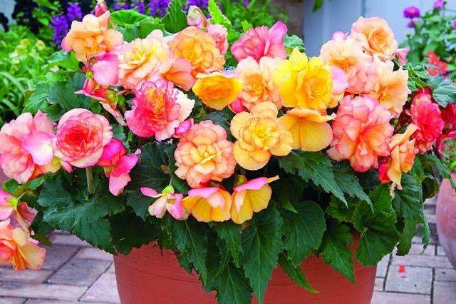 21 Bunga Nan Indah Dan Menakjubkan - Harian Depok