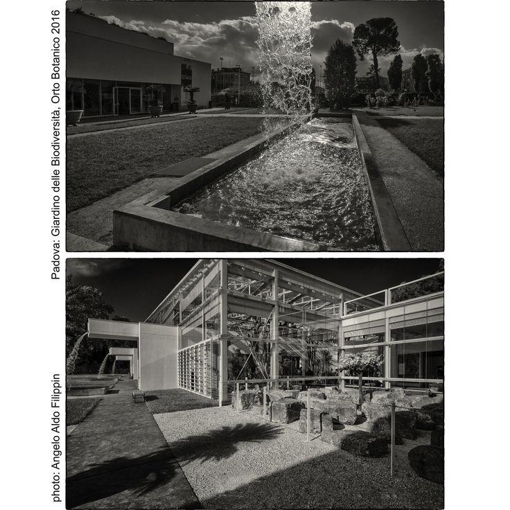 https://flic.kr/p/JPqpt7 | Il Giardino della Biodiversità, Orto Botanico Università di Padova fondato nel 1545 - Padova 2016