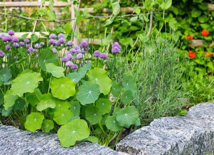 Köksträdgård. Upphöjda odlingsbäddar av gamla grindstolpar. Foto: Erika Åberg