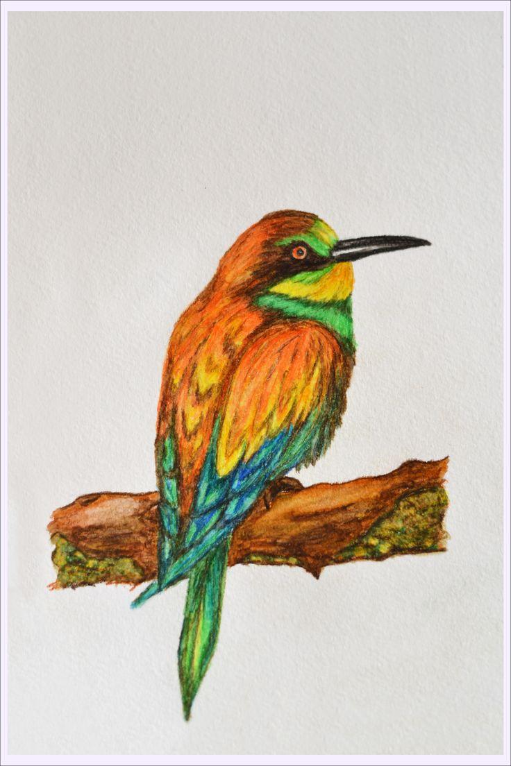 Птицы акварельными карандашами