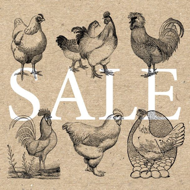 Chicken Rooster Collection Instant Download Digital printable vintage clipart  graphic for stickers scrapbooking decor prints HQ 300dpi by UnoPrint on Etsy #hq #png #bw #Ephemera #diy #old #book #illustration #gravure #inspiration #retro #antique #vintage #300dpi #craft #draw #drawing  #black #white #printable #crafts #transfer #decor #hand #digital #collage #scrapbooking #quality