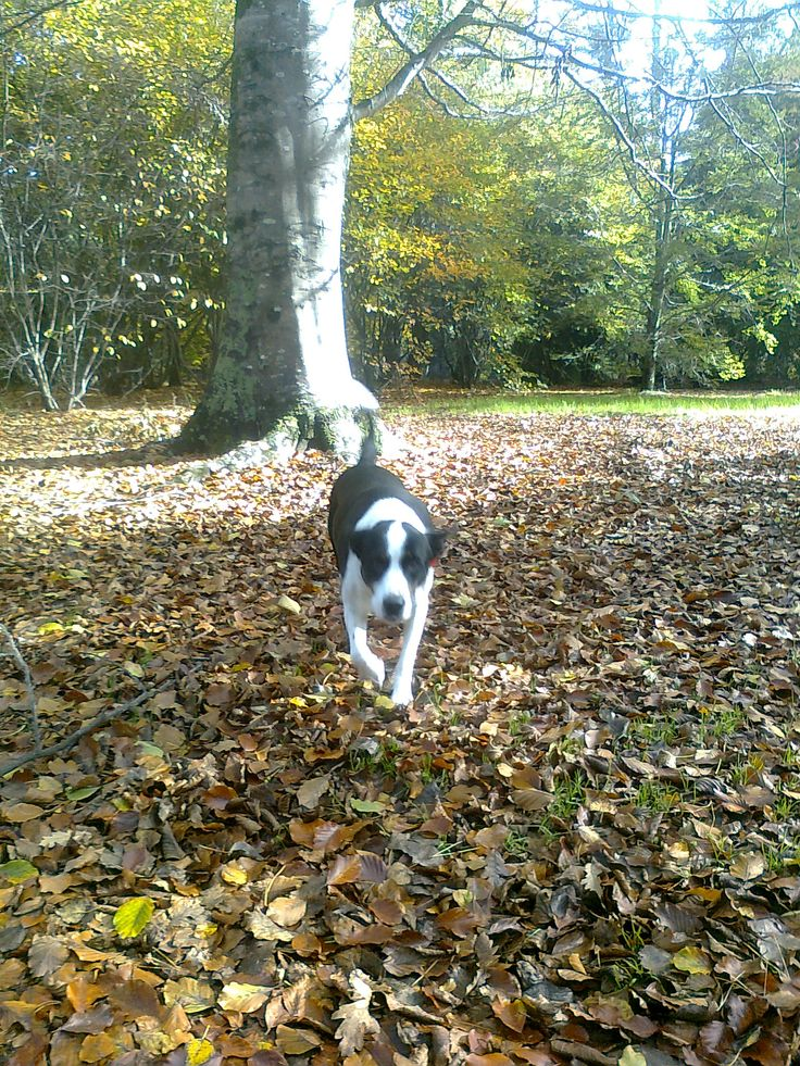 Queens Park in autumn