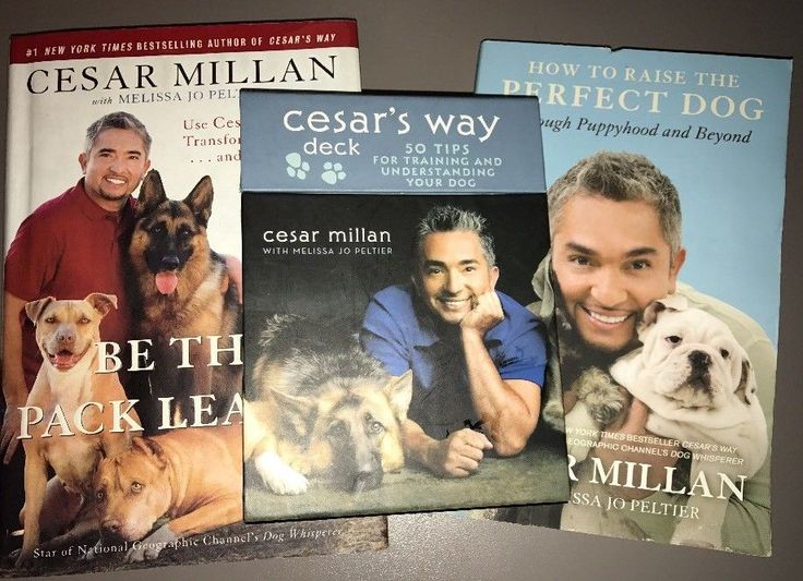Cesar Millan Training Books And Cards - Lot Of 3 - Dog Training Tips educational