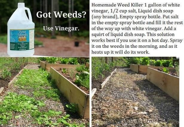 Home Remedy for killing weeds