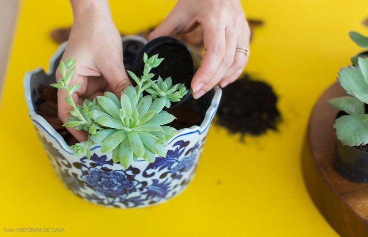 Aprenda a fazer um arranjo de suculentas usando um bowl que você tenha em casa!