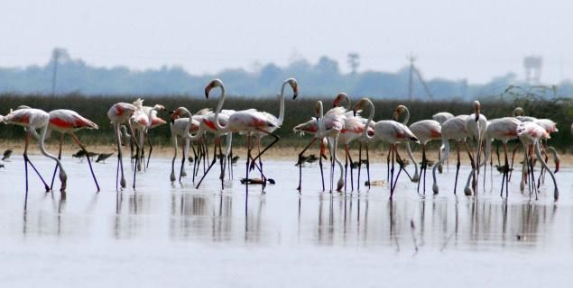 Pulicat, Irakam & Nelappattu to be developed as world tourist spots - read complete story click here.... http://www.thehansindia.com/posts/index/2015-01-10/Pulicat-Irakam--Nelappattu-to-be-developed-as-world-tourist-spots-125408