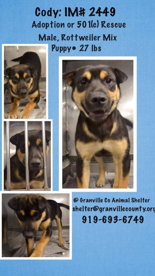 lizardmarsh: Oxford NC: ((URGENT- GASSING SHELTER)) (Granville Co.)!  VERY SMALL RURAL SHELTER!! PLS HELP SZVE THESE DOGS FROM A SLOW CRUEL TORTUROUS AWFUL DEATH. Lots of volunteer support!