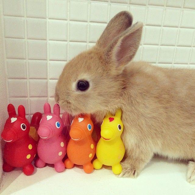 Instagram media fufusora - #ネザーランドドワーフ #ネザーランド #うさぎ #うさぎのmilk #rabbit #bunny…