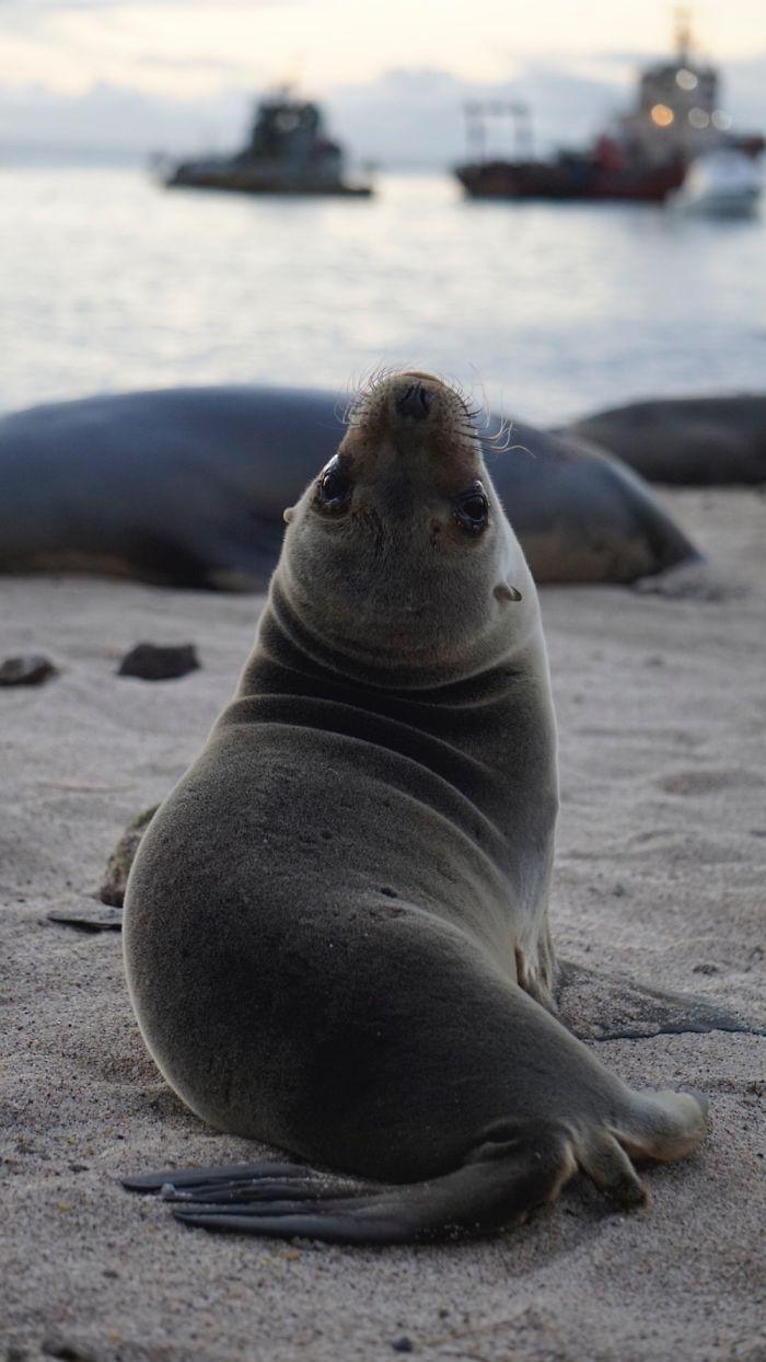 Kinnara Bosworth ha passato una settimana intera nelle Isole Galapagos (Ecuador) ed è rimasta folgorata dai cuccioli dei leoni marini.