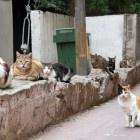 Couple splits over 550 house cats: Couple Split, Cat Quotes, Cats 3, 550 House, Pet Cat, Quotes Memes, 550 Gatos, Memes Lolcat, House Cat