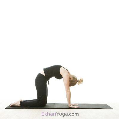 yoga pose cat pose/majaryasana  yoga poses poses cat pose