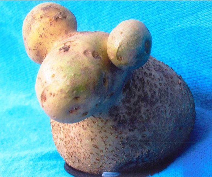 734 best lgn canlilar btklerrp doa olaylari images on potato sheep photograph funny exotic fruits and vegetables photos altavistaventures Gallery