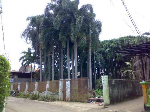 Dijual Tanah Di Legoso Raya Ciputat Jalan Legoso Raya Ciputat, Legoso Ciputat » Tangerang Selatan » Banten