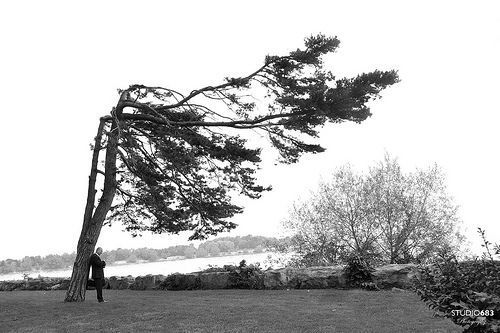 Groom beneath a Wind-Blown Tree.