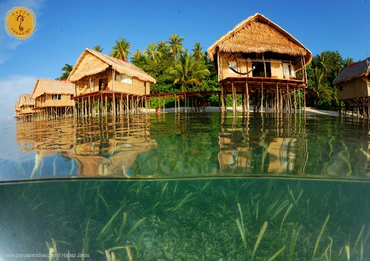 Diving and Birdwatching in Indonesian Papua Raja Ampat