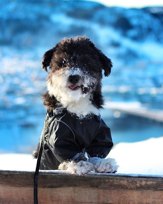 Toby loves snow. #HookedOnHööks I www.hookseurope.com I gentlemantoby