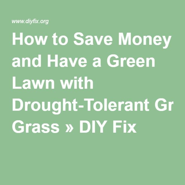 How to Save Money and Have a Green Lawn with Drought-Tolerant Grass » DIY Fix