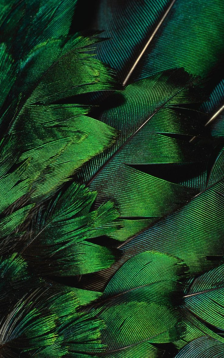 Beautiful emerald green feathers.