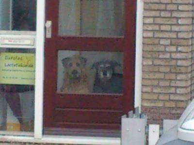 13 november 2012: Geluk. Foto: Mijn twee lieve oude honden, wachtend tot ik weer tijd heb voor hun soortgebonden zorg.