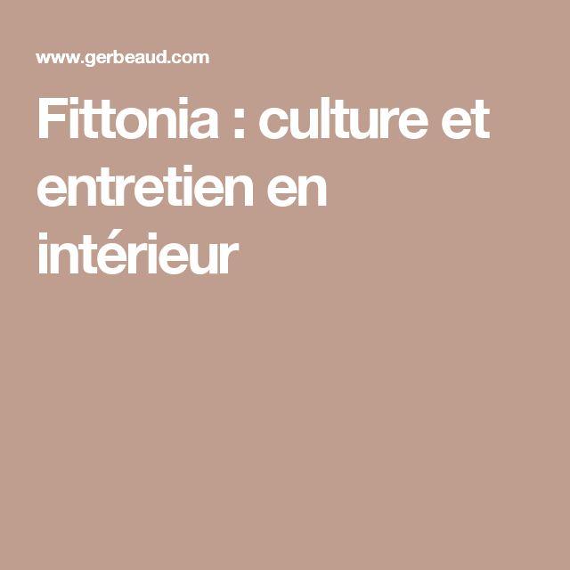 Fittonia : culture et entretien en intérieur