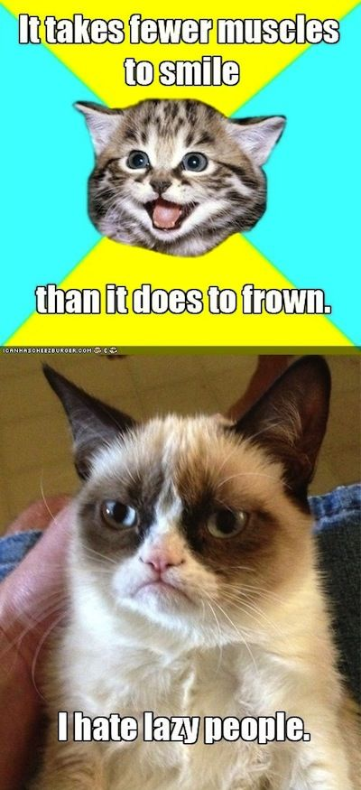 Funny kitty meets Grumpy Cat ...For more funny animal pics with quotes visit www.bestfunnyjokes4u.com/rofl-funny-pic-of-the-day-8/