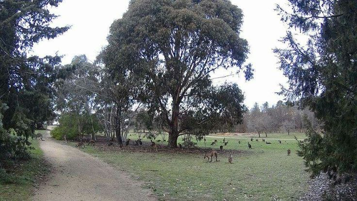 Wild roos