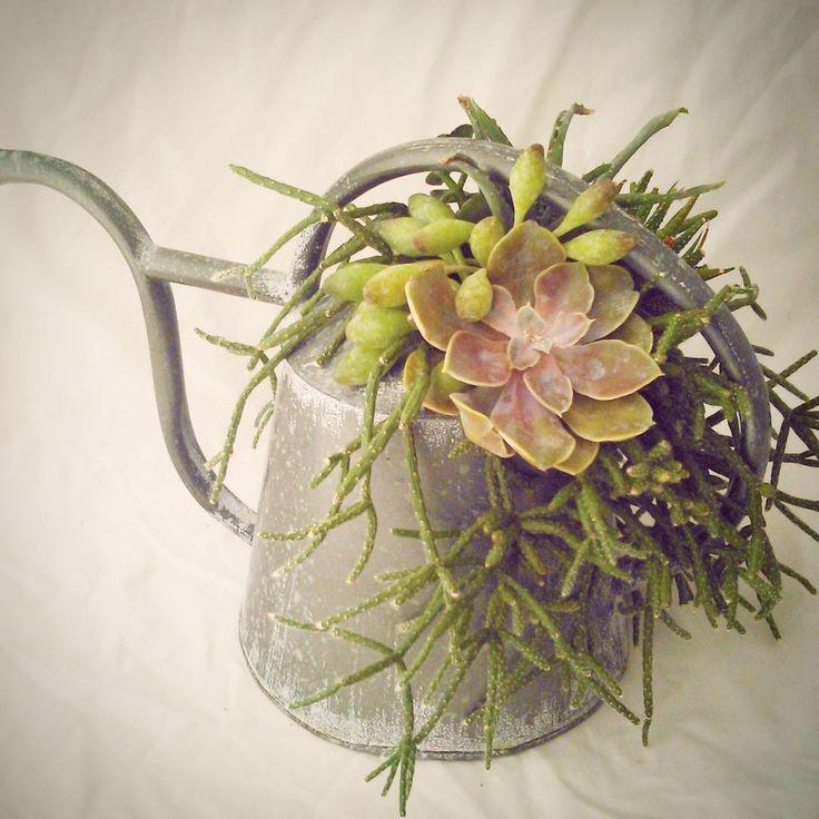 L'arrosoir succulent - centre de table mariage champêtre & vintage !
