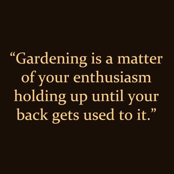 446 best community garden ideas images on Pinterest Gardening