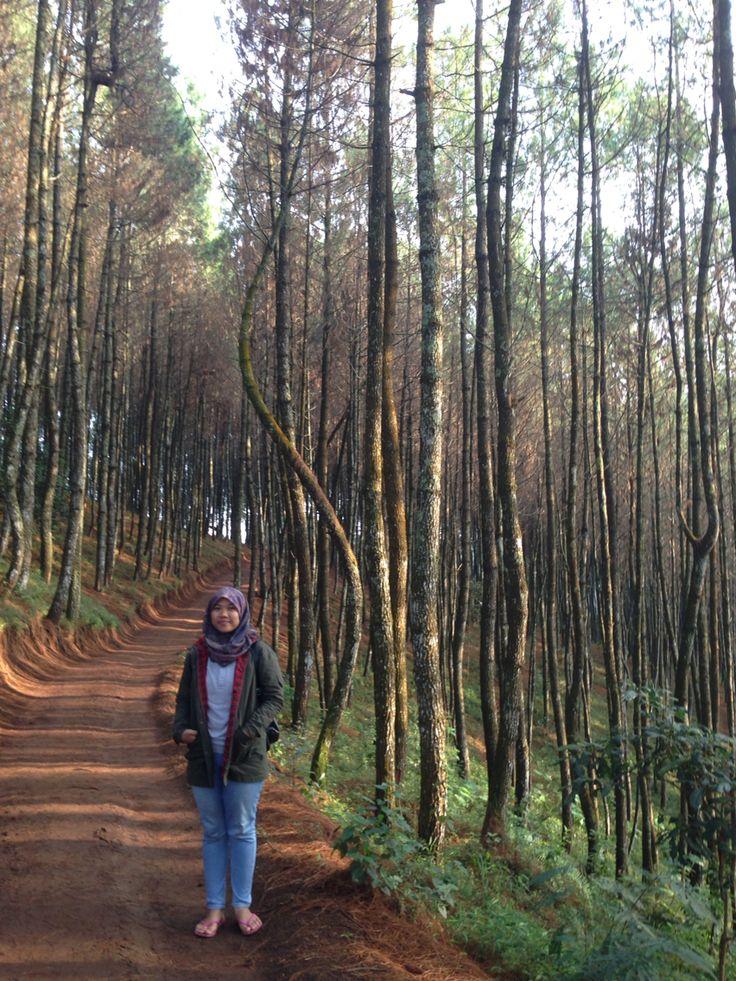 Hutan Pinus Moko, Bandung Indonesia