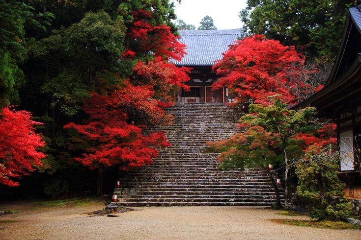 神護寺 紅葉 京都の紅葉は高雄から 今年2016年の紅葉は綺麗!