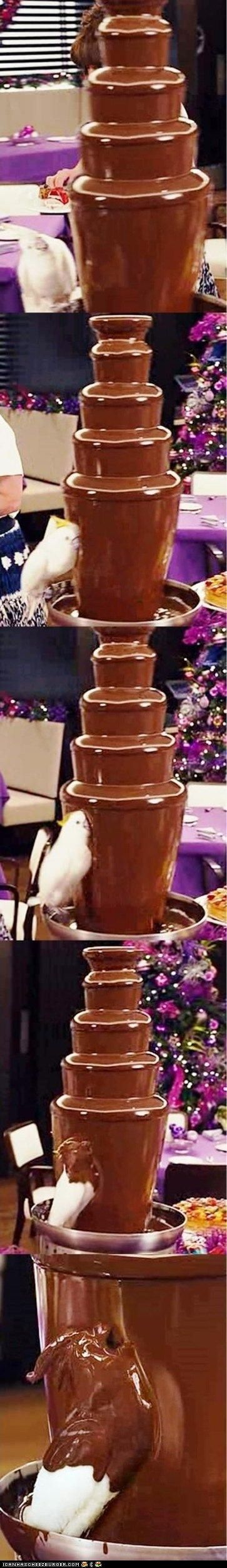 This bird does what we've all thought about doing at one point or another.: Chocolate Fountains, Laughing, Chocolates Fountain, Birdbaths, Parrots, Chocolates Covers, Chocolate Covered, Birds Bath, So Funny
