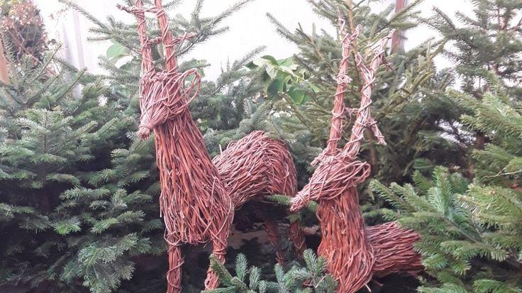 Sie suchen noch nach Weihnachtsgeschenken? Dann haben wir genau die richtigen Ideen für Sie, um Ihre Liebsten zu überraschen.