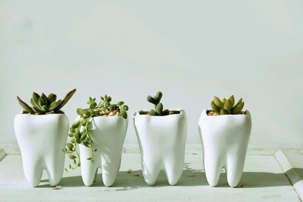 Looking for a gift for your favorite dentist? These ceramic tooth planters are sure to get a chuckle. Más