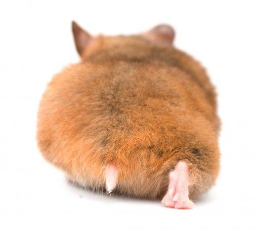 Hamster behind ☺