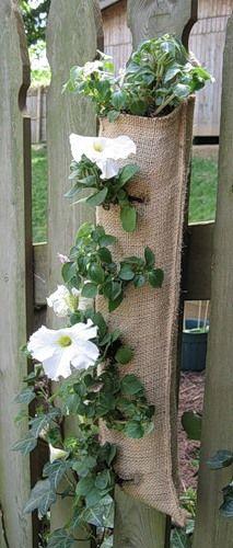Flores na cerca