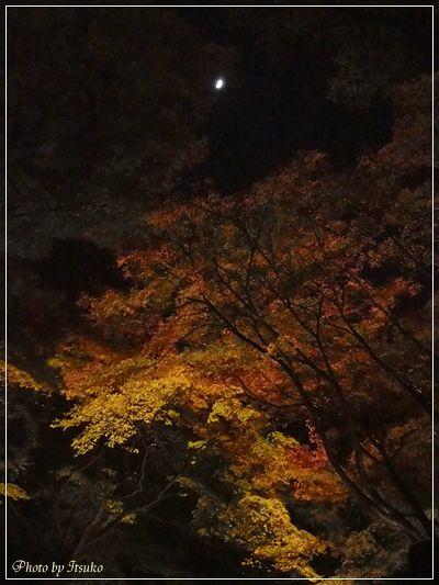 六義園ライトアップ③ | 美濃太田駅徒歩5分・地域に愛され15年のフラワー教室