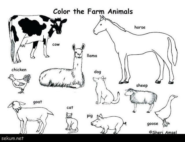 25 Amazing Picture Of Printable Animal Coloring Pages Albanysinsanity Com Farm Animal Coloring Pages Zoo Animal Coloring Pages Farm Coloring Pages