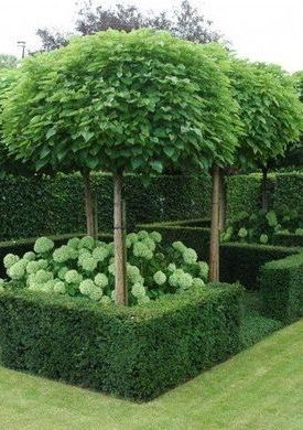 Trees, clipped hedges and green/white hydrangeas