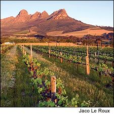 The Stellenbosch region is home to many of South Africa's top wine producers; Ken Forrester's vineyards are located along the Helderburg Mountains.