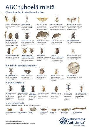 Raksystems Anticimex, brochure, pest control