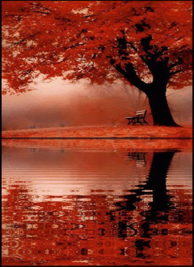 Breathtaking red fall leaves by lake with reflection. Love it!