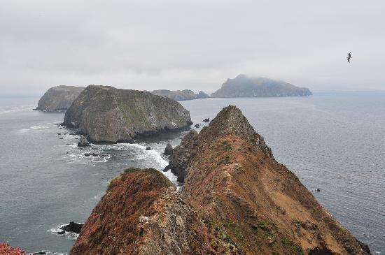 Bonaventure Island National Park birds | Channel Islands National Park, Califórnia: Channel Island Overlook