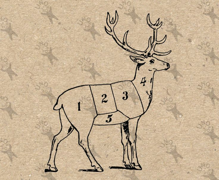 Butchering Deer Butcher cuts Meat Cuts picture Vintage image Instant Download Digital printable clipart graphic burlap transfer HQ300dpi by UnoPrint on Etsy