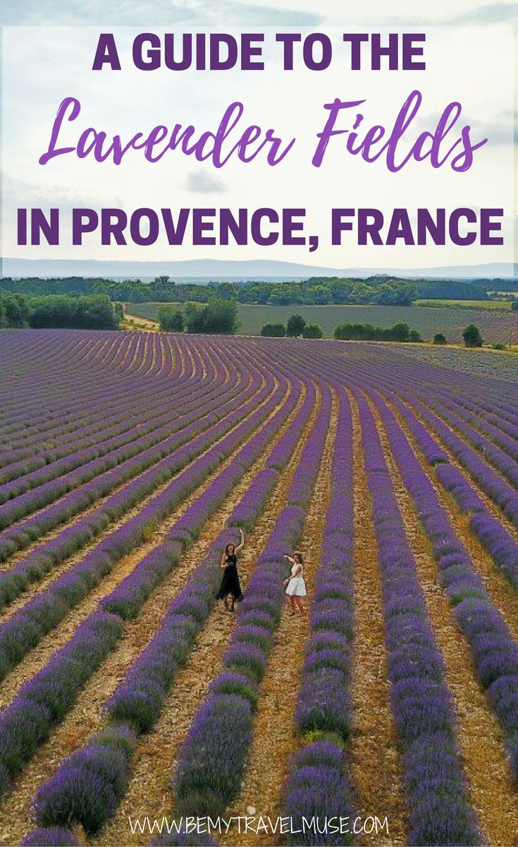 A beautiful, picturesque spot in France, the lavender fields in Provence is a must visit when you are in the romantic country. Here is a full guide to the Lavender Fields, and tips on how to get there, where to eat, and where to stay included | Be My Travel Muse | France travel tips | Girlfriend getaway ideas | Drone shots
