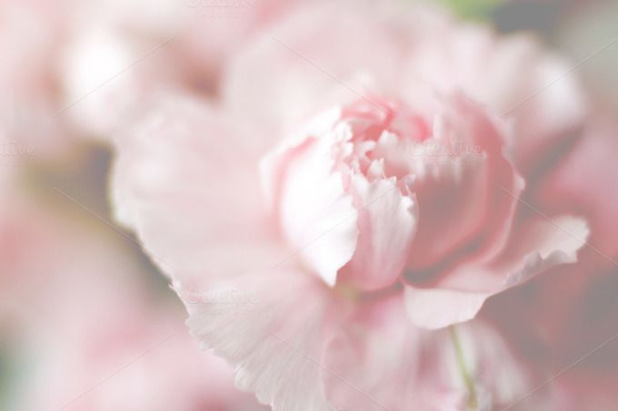 Pink flower by IDA SHOP on Creative Market