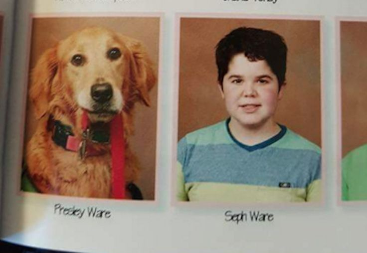 Seph attends school with his service dog, Presley, by his side. So on picture day, photographers felt it only fitting to give Presley his own spot in the yearbook.